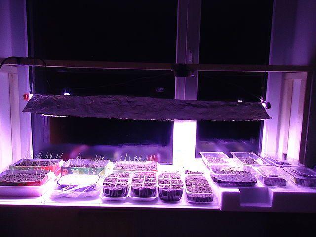 Поступление ламп для растений (фитоламп) Osram Fluora и Camelion BIO. Обзо