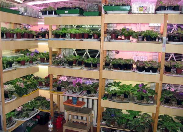 Как сделать фитолампу для растений своими руками